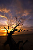 Dead branches against sunrise Stock Image