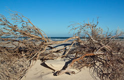 Dead branches on a beach Stock Photography