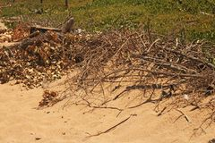 DEAD BRANCHES AT THE EDGE OF SAND ON A BEACH. Image of a dead branches the edge of a sandy beach at the sea in summer royalty free stock photos