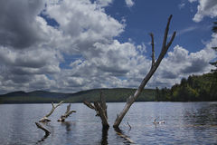 Dead branches emerge from water, Limekiln Lake, Adirondacks, New Stock Photography