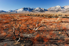 Dead branches with a road and mountains Royalty Free Stock Image