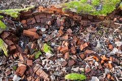 Dead broken tree Royalty Free Stock Photo