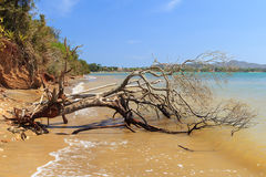 Dead broken tree in sea after storm, hurricane Stock Photography