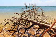 Dead broken tree in waves of sea after hurricane, storm Royalty Free Stock Photo