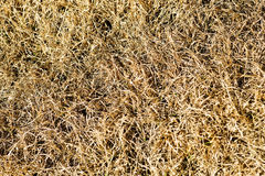 Dead brown grass Royalty Free Stock Image