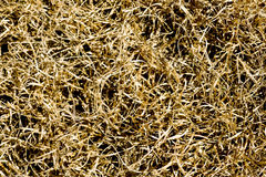 Dead brown grass Stock Photos