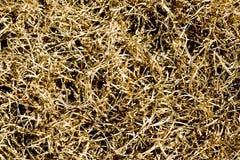 Dead brown grass Stock Photos