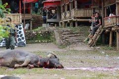 Dead Buffalo lay on the floor Royalty Free Stock Photography