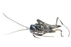 Dead Bug Stock Image