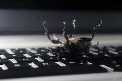 Dead bug on laptop keyboard. Royalty Free Stock Photo