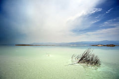 Dead Bush in Dead Sea Stock Photography