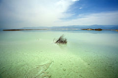 Withered Bush in Dead Sea Royalty Free Stock Image