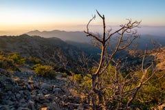 Dead Bush on Machairas Mountains Trail, Cyprus. A Dead Bush next to a nature trail in Machairas Mountains Trail, Cyprus stock photo