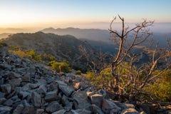 Dead Bush on Machairas Mountains Trail, Cyprus. A Dead Bush next to a nature trail in Machairas Mountains Trail, Cyprus royalty free stock image