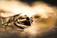 Dead butterfly with details Royalty Free Stock Photos