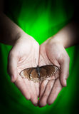 Dead butterfly in lady hand, green earth concept Stock Image