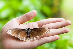 Dead butterfly in lady hand, green earth concept Royalty Free Stock Photos
