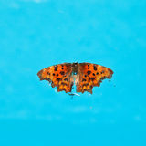 Dead butterfly on surface of water Stock Photography