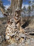 Dead cactus stock image