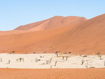 Dead Camelthorn Trees in Dead Vlei, Namibia Stock Photo