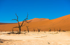 Dead Camelthorn Trees and red dunes in Deadvlei, Sossusvlei, Nam Stock Photography