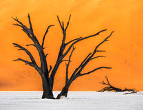 Dead Camelthorn Trees and red dunes, Deadvlei, Sossusvlei, Namibia. Dead Camelthorn Trees and red dunes in Deadvlei, Sossusvlei, Namib-Naukluft National Park Stock Image