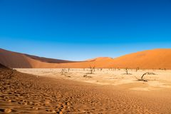 Dead Camelthorn Trees and red dunes,Deadvlei, Sossusvlei, Namibia Stock Photo