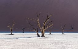 Dead Camelthorn Trees and red dunes,Deadvlei, Sossusvlei, Namibia Stock Image