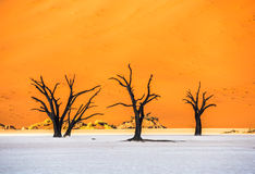 Dead Camelthorn Trees and red dunes,Deadvlei, Sossusvlei, Namibia Royalty Free Stock Photography