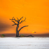 Dead Camelthorn Trees and red dunes,Deadvlei, Sossusvlei, Namibia Stock Image