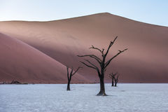 Dead Camelthorn Trees and red dunes, Deadvlei, Sossusvlei, Namibia. Dead Camelthorn Trees and red dunes in Deadvlei, Sossusvlei, Namib-Naukluft National Park Royalty Free Stock Images