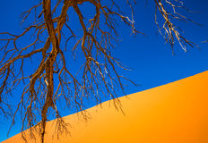 Dead Camelthorn Trees and red dunes, Sossusvlei, Namib-Naukluft Stock Photo