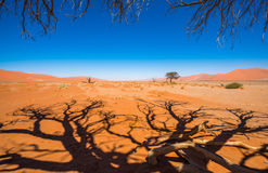 Dead Camelthorn Trees and red dunes, Sossusvlei, Namib-Naukluft. Dead Camelthorn Trees and red dunes in Sossusvlei, Namib-Naukluft National Park, Namibia Stock Photography