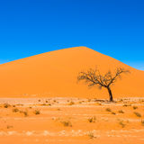 Dead Camelthorn Trees and red dunes, Sossusvlei, Namib-Naukluft Royalty Free Stock Photography