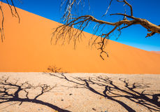 Dead Camelthorn Trees and red dunes, Sossusvlei, Namib-Naukluft Royalty Free Stock Photo