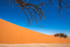 Dead Camelthorn Trees and red dunes in Sossusvlei,Namib-Naukluft Stock Photos