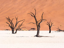 Dead Camelthorn (Acacia erioloba) Trees in Dead Vlei, Namibia Stock Photo
