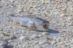Dead Catfish On The Beach stock photo