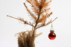 Dead Christmas tree. Color shot of a small dead Christmas tree Royalty Free Stock Photography