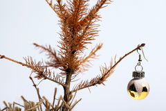 Dead Christmas tree. Color shot of a small dead Christmas tree Royalty Free Stock Photos