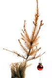 Dead Christmas tree Stock Photography