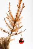 Dead Christmas tree stock images