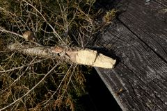 Dead Christmas tree on weathered wood porch stock photos