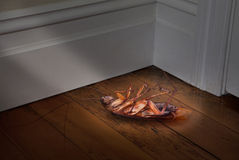 Dead Cockroach Pest Control. A large dead cockroach laying in the corner of a dark room stock image
