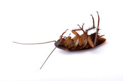 Dead Cockroach Stock Images