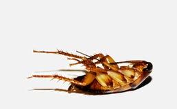 Dead cockroach Stock Photo