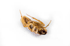 Dead cockroach Stock Photos