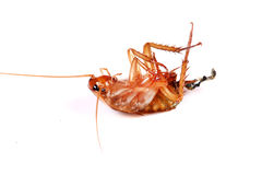 Dead cockroach Royalty Free Stock Images