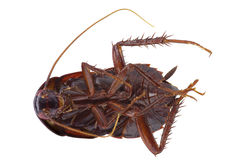 Dead cockroach Stock Photography