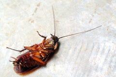 Dead Cockroach on floor Stock Photography